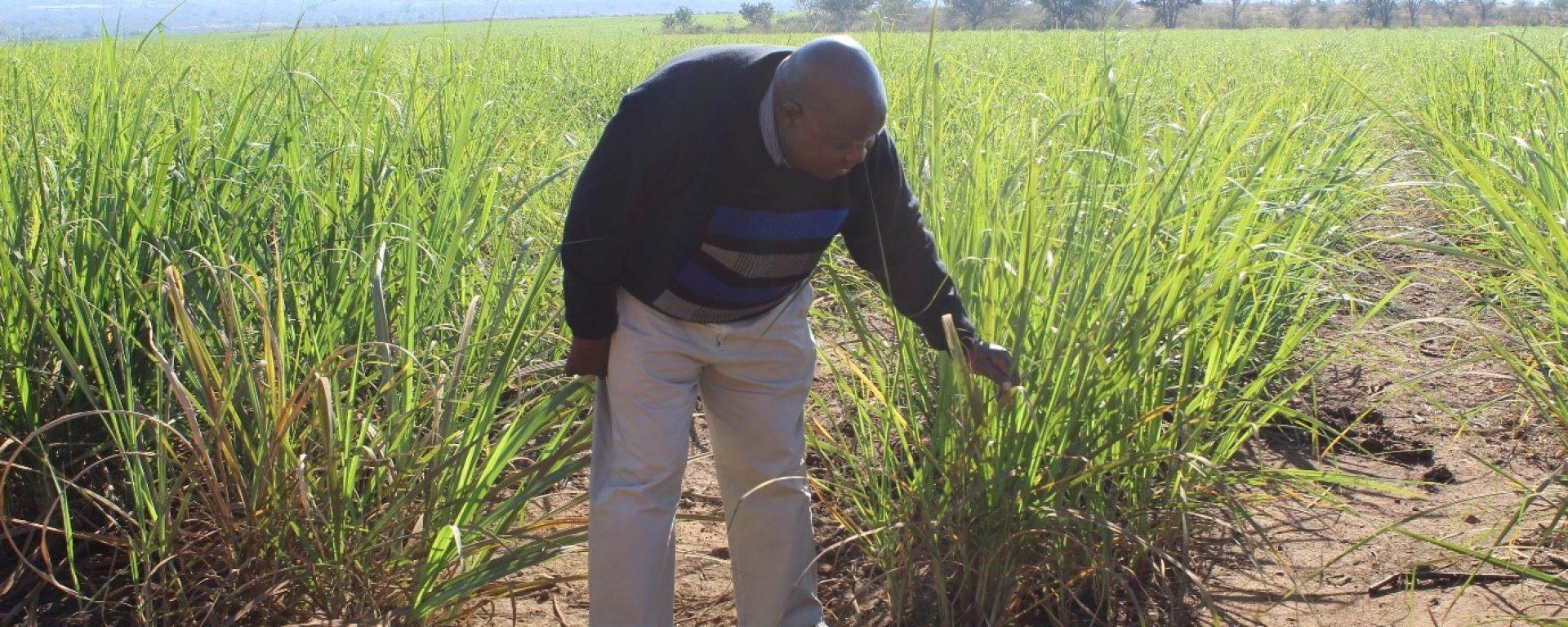 Dicks Mathebula pic 2of 2nd Story (Mpumalanga)
